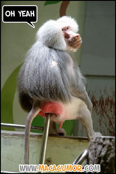 Macaco no Ferro